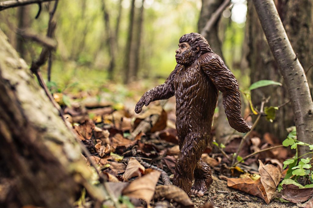 evolution, marketing, trends, fitness, online